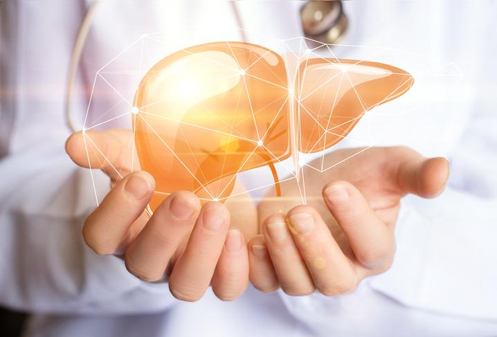 Doctor holding an animated illustration of a human liver